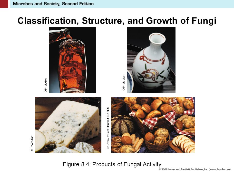 Classification, Structure, and Growth of Fungi Figure 8.4: Products of Fungal Activity © Photodisc Courtesy of Scott Bauer/USDA ARS