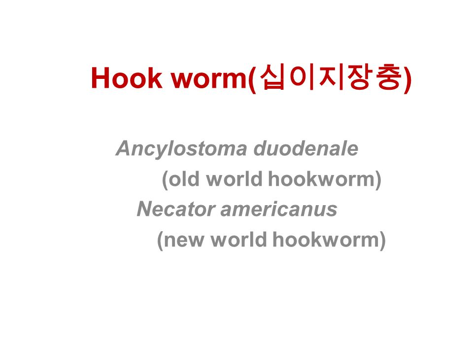 Hook worm( 십이지장충 ) Ancylostoma duodenale (old world hookworm) Necator americanus (new world hookworm)