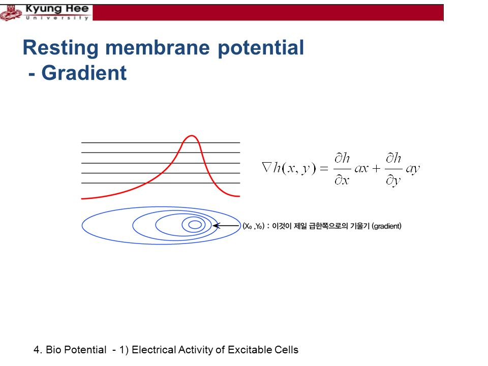 4. Bio Potential - 1) Electrical Activity of Excitable Cells Resting membrane potential - Gradient