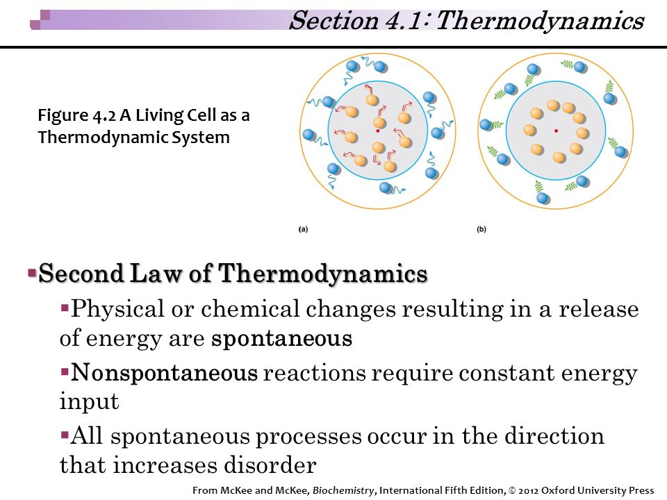 Section 4.1: Thermodynamics  Second Law of Thermodynamics  Physical or chemical changes resulting in a release of energy are spontaneous  Nonspontaneous reactions require constant energy input  All spontaneous processes occur in the direction that increases disorder Figure 4.2 A Living Cell as a Thermodynamic System From McKee and McKee, Biochemistry, International Fifth Edition, © 2012 Oxford University Press