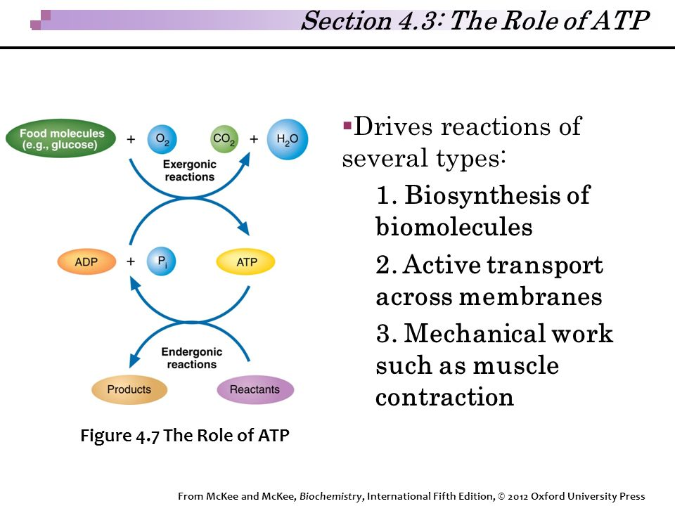  Drives reactions of several types: 1. Biosynthesis of biomolecules 2.