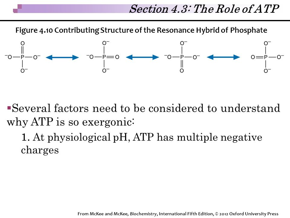  Several factors need to be considered to understand why ATP is so exergonic: 1.